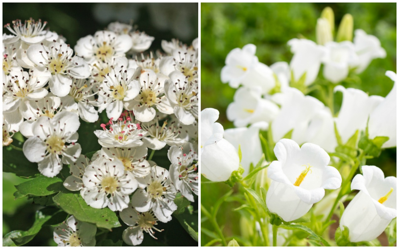 Birth month flowers and their meanings good living guide birth month flowers hawthorn lily of the valley may izmirmasajfo