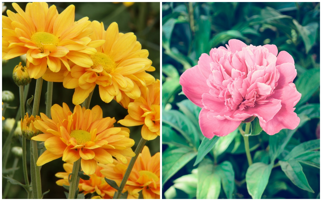Birth Month Flowers And Their Meanings Good Living Guide
