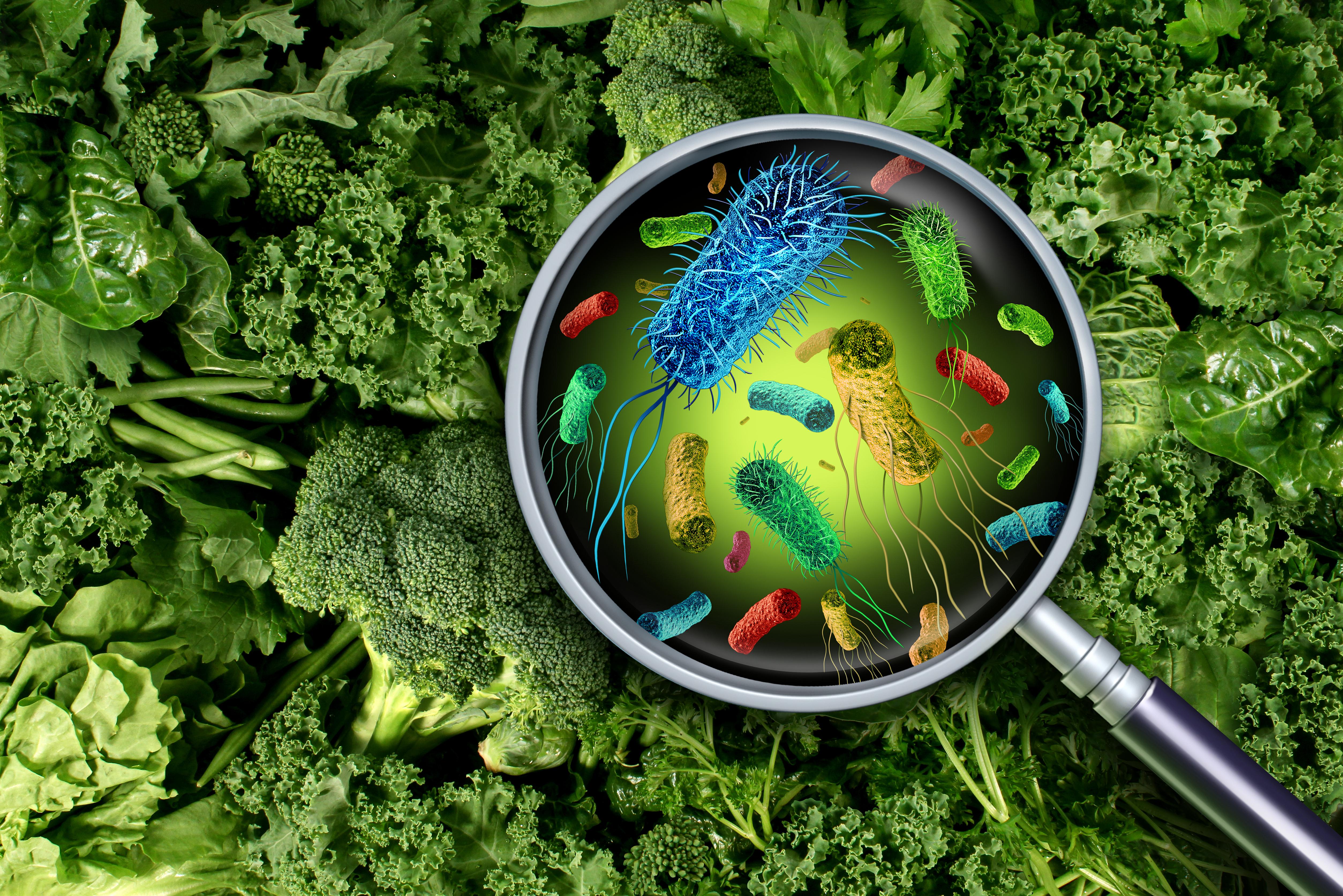 E. coli Vegetables Lettuce