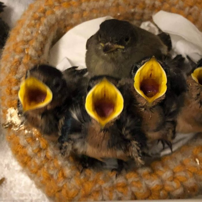Knitted Baby Bird Nests