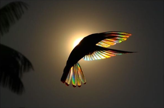 Photos Of Hummingbirds' Wings
