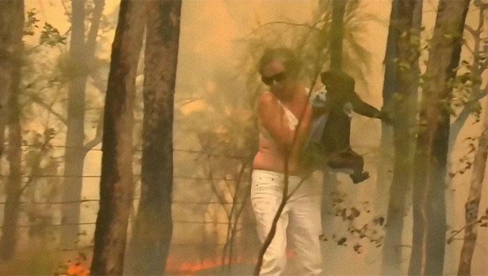 Brave Woman Saves Screaming Koala