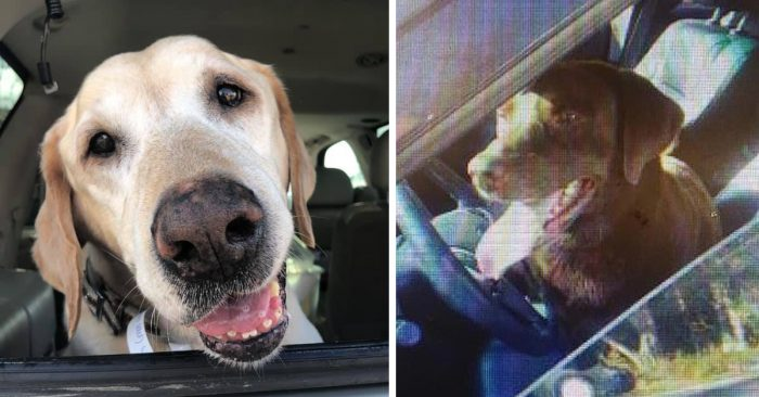 Dog Stays By His Brother's Side After Being Hit By A Car And Left To Die