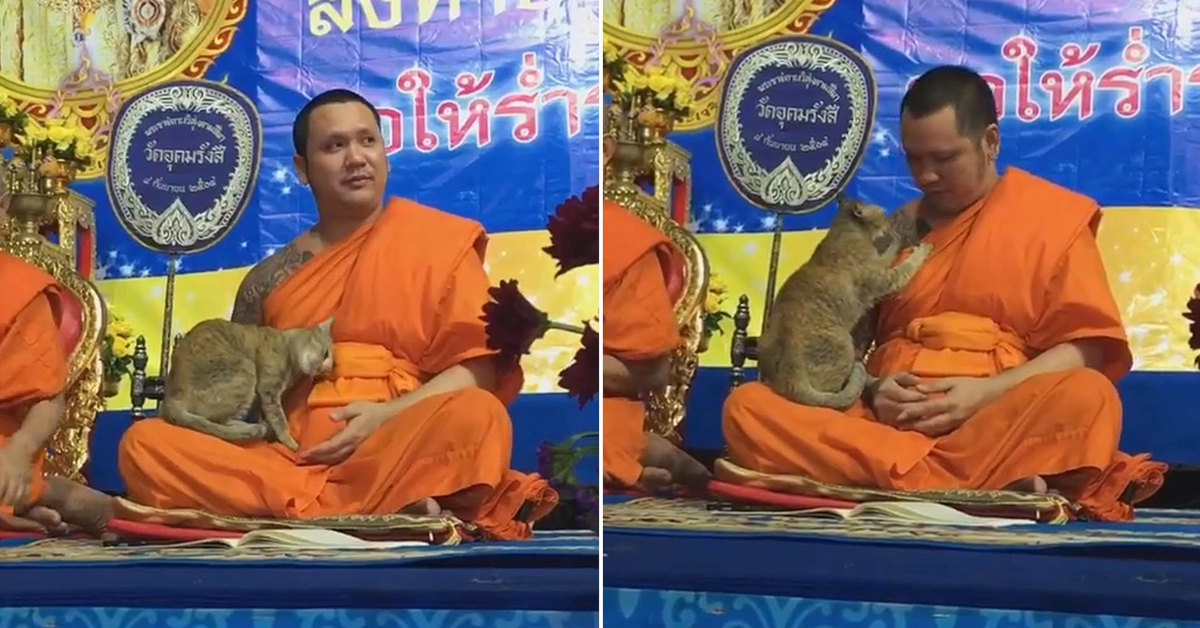 Playful Cat Tests Buddhist Monk's Patience During Prayers