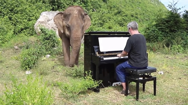 Man Plays Classical Piano To Comfort Blind And Elderly Elephants