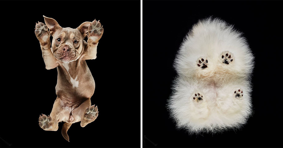 Photographer Captures Images Of Cats and Dogs From Underneath