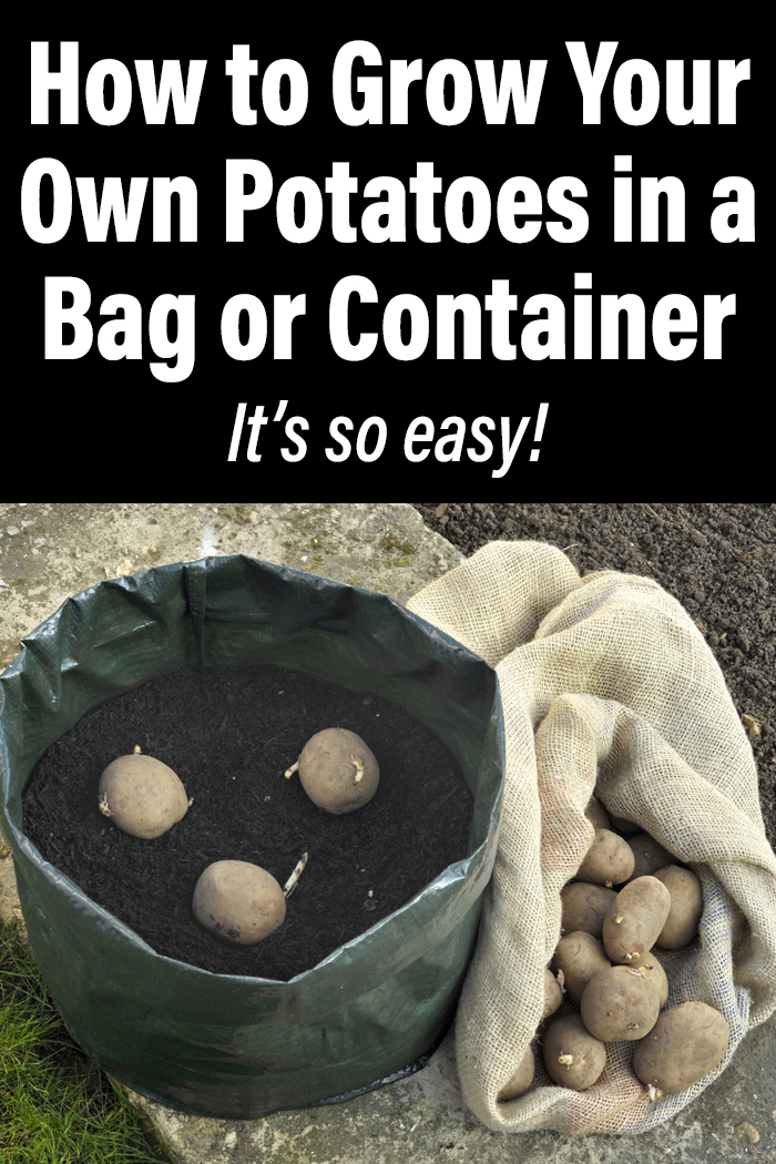 How to Grow Your Own Potatoes in a Bag or Container