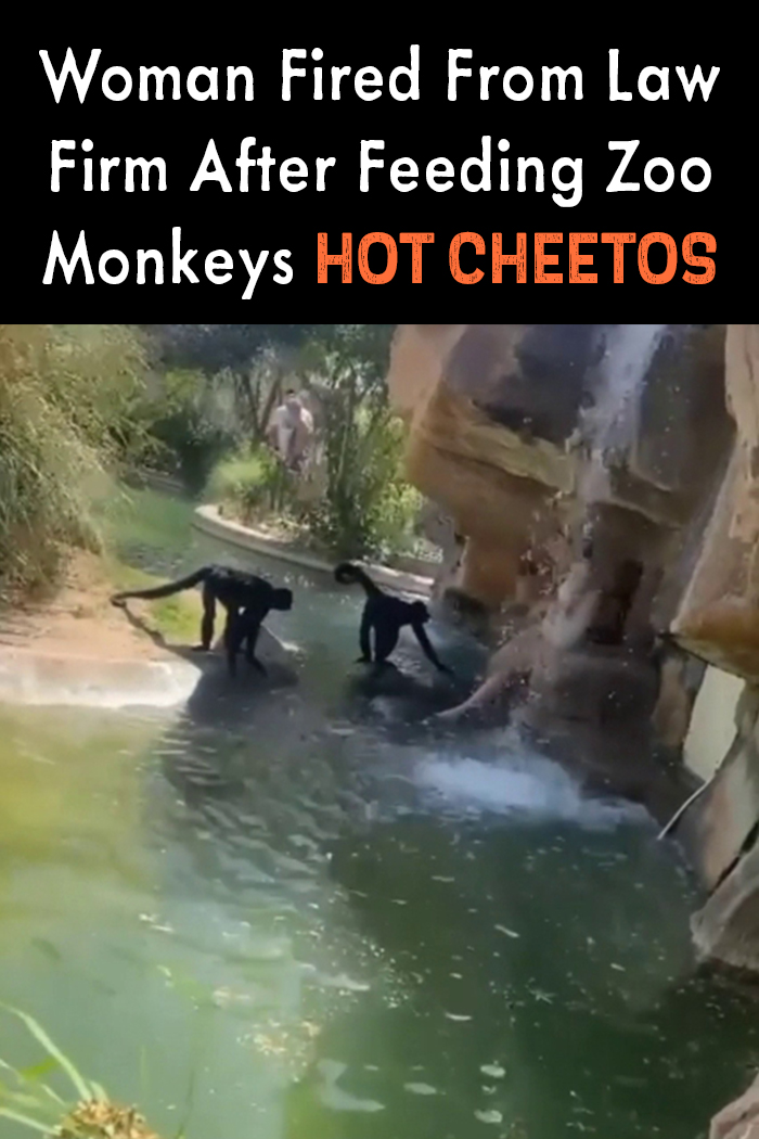 Woman Fired From Law Firm After Feeding Zoo Monkeys Hot Cheetos