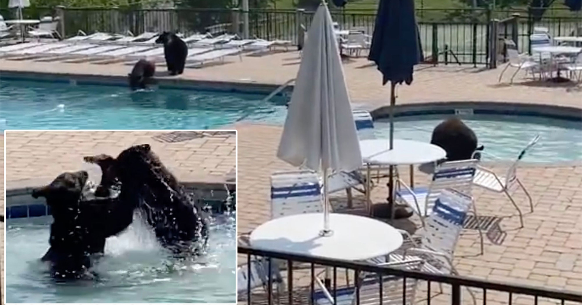 This Family Of Bears Had A Pool Party And Its So Cute
